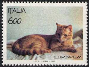 Animali domestici - Gatti - razza europea