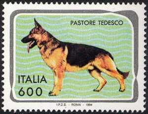 Animali domestici - Cani - Pastore tedesco