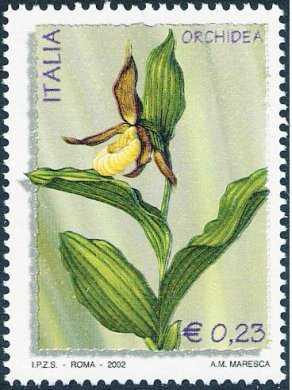 «L'ambiente e la natura» - Flora,  fauna e invertebrati - Orchidea