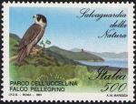 Salvaguardia della natura - Falco pellegrino