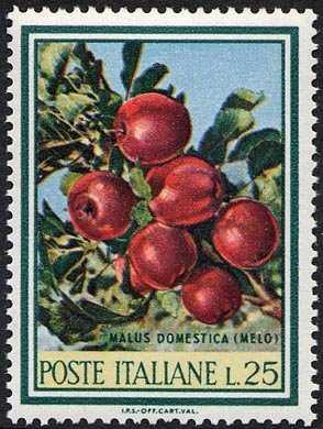 """"""" Flora """" - 2ª serie - ramo di melo"""