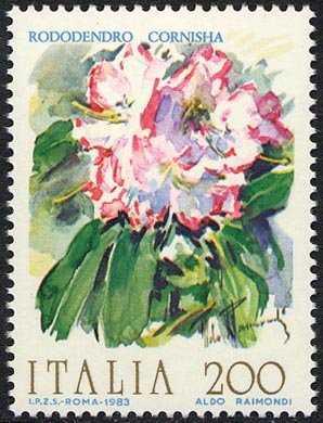 Fiori d'Italia - Rododendro cornisha