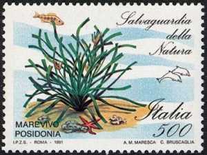 Salvaguardia della natura - riserva marina «Marevivo» Poseidonia