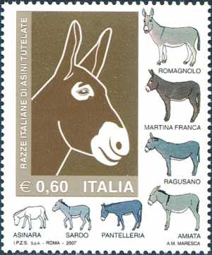 Razze italiane di asini tutelate - testa di asino e razze tutelate